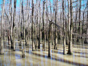Would you know how to make drinkable water from this swamp?