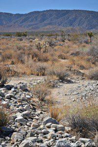dry stream bed LA
