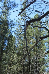 Look up before settiing up camp - dead branches overhead could become deadly.