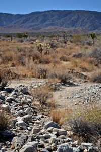 The water rolled rocks in the desert show this area has flash floods