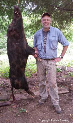 hog hunting, Simning, snowy river