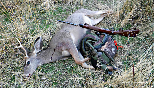 why-do-you-hunt, deer hunting, best deer rifle