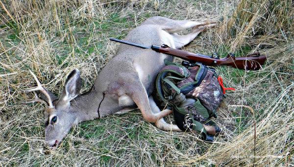 why-do-you-hunt, deer hunting, best deer rifle