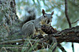 squirrel, blackpowder squirrel hunting